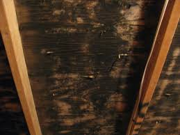 attic mould