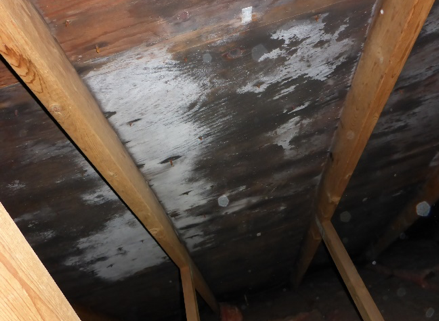 early sign of attic damp